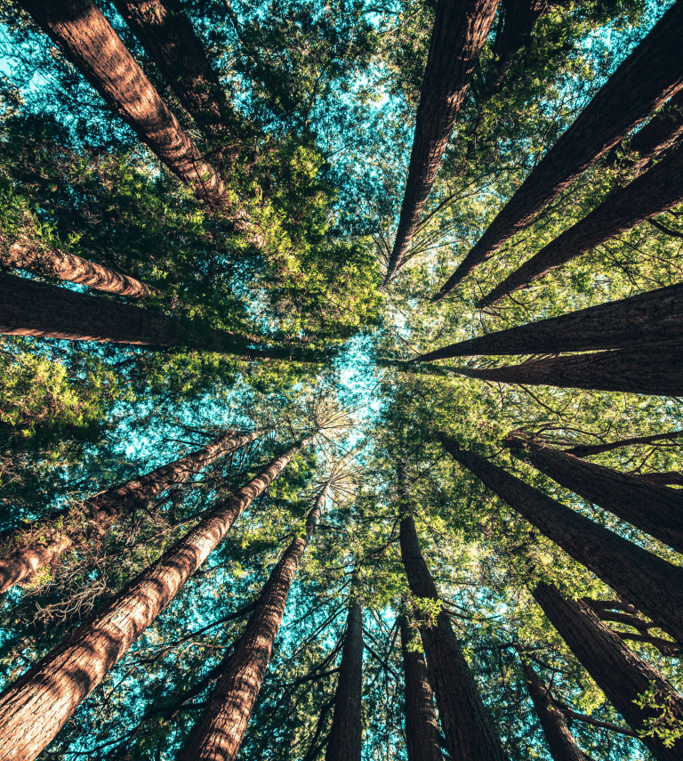 Looking up at a ring of trees with blue sky in the center.