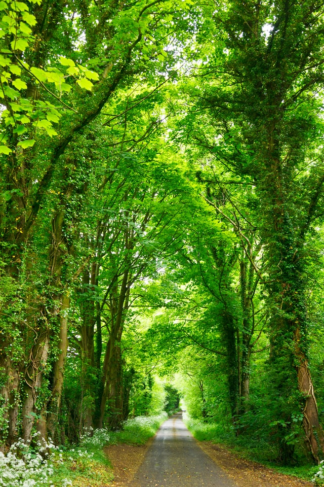 Concrete path running through a tunnel of green trees.
